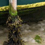 Photo, photographie de détail de coque de bateau du Finistère, vert, marron, jaune, avec du goémon et une béquille sur le sable @ Christophe Pluchon