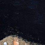 Photo, photographie de détail de coque de bateau du Finistère, noir, marron, orange, avec des crabes, un bigorneau et du sable @ Christophe Pluchon