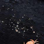 Photo, photographie de détail de coque de bateau du Finistère, noir, blanc, orange, avec un petit crabe et des grains de sable @ Christophe Pluchon