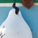 Photo, photographie de détail de coque de bateau du Finistère, vert, bleu, noir, blanc, marron, orange, rouille, avec une ancre rouillée, une bouée, une corde ou un cordage @ Christophe Pluchon